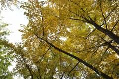 遇见四季 2015年10月~感受秋~与姐妹淘一起~京津双城纪