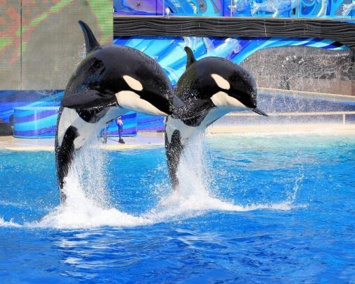 【圣地亚哥海洋世界】(门票自理),是世界最大的海洋主题公园,最著名
