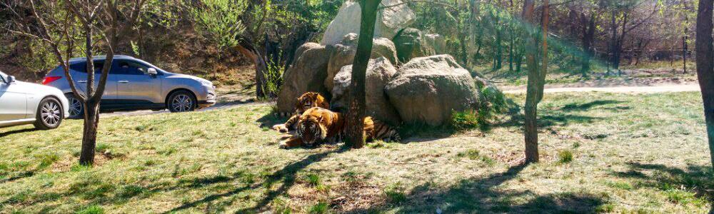 图:北京动物园正门 by sam 动物园有很多个区,哺乳动物,两栖类,爬行