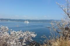 撑死在九州——全九州赏樱之旅十日游