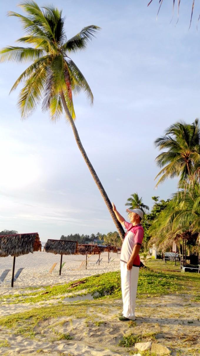 树 棕榈树 680_1211 竖版 竖屏