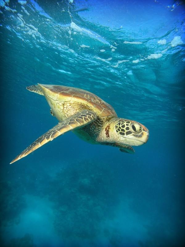 大洋洲地区旅游 大堡礁旅游攻略 上天下海拥抱你——大堡礁.        .