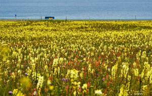 【特克斯图片】有一天,西域的阳光洒在心上——伊犁的海洋