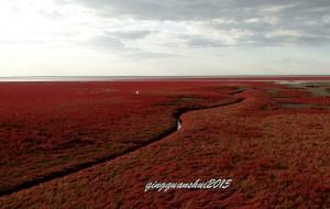 【盘锦图片】红海滩--记忆中那片火红的生命之色