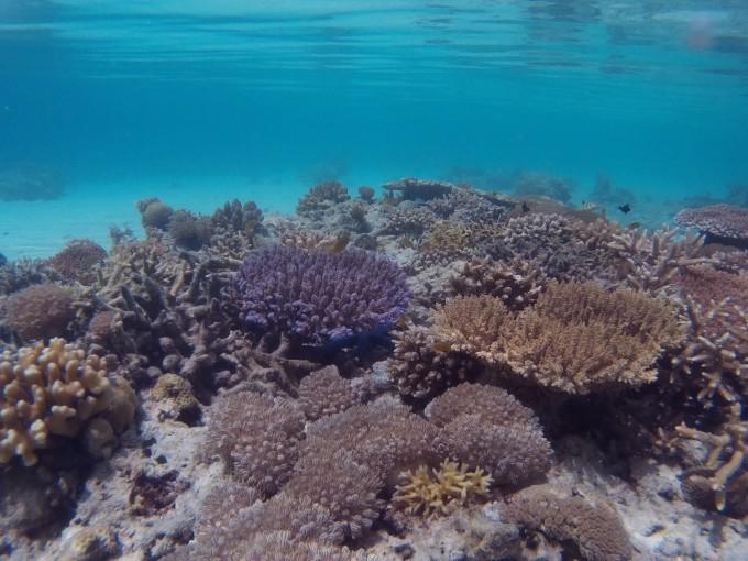 11.23 马来西亚潜水之旅