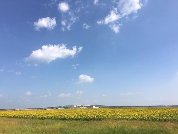 草原四日嗨