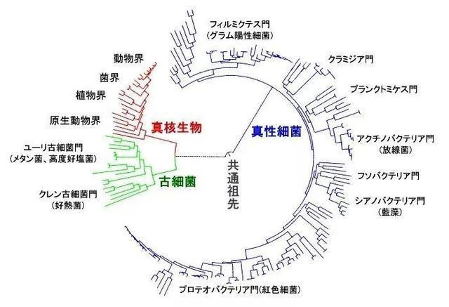 東京·美食物語 183