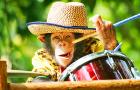 亲子游玩推荐 长隆野生动物世界门票(可选马戏+动物世界优惠套票 儿童老人学生多票种可选 自助取票快速入园)