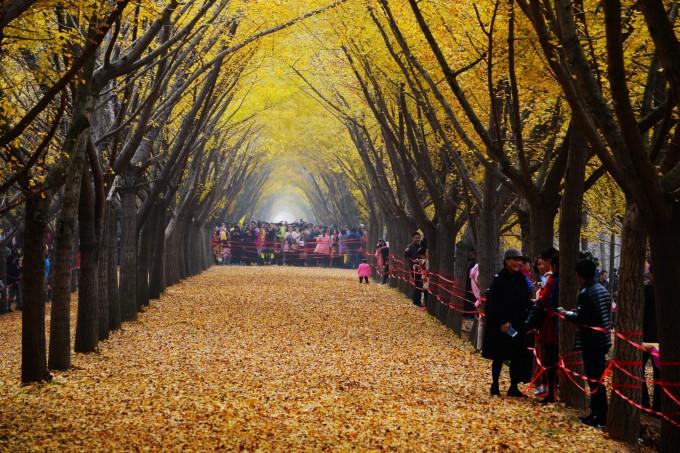 邳州论坛_就这样被你征服--邳州-银杏大道-时光隧道,徐州旅游攻略 - 马蜂窝